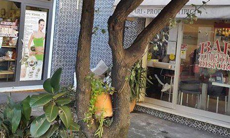 vista di un tronco di un albero vicino all'ingresso del ristorante