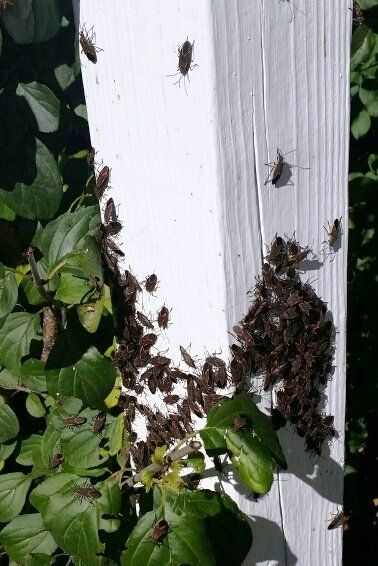 Expert providing pest control services in Dousman,WI