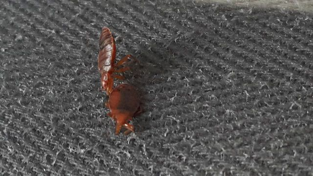 bed bugs in Kings Mills, OH