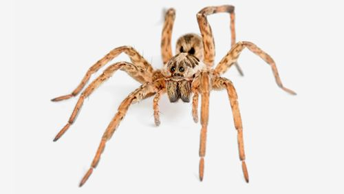 Most prevalent pests' service for spiders in Kings Mills, OH