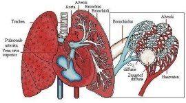 prestazioni sanitarie, ecocardiografia, test da sforzo