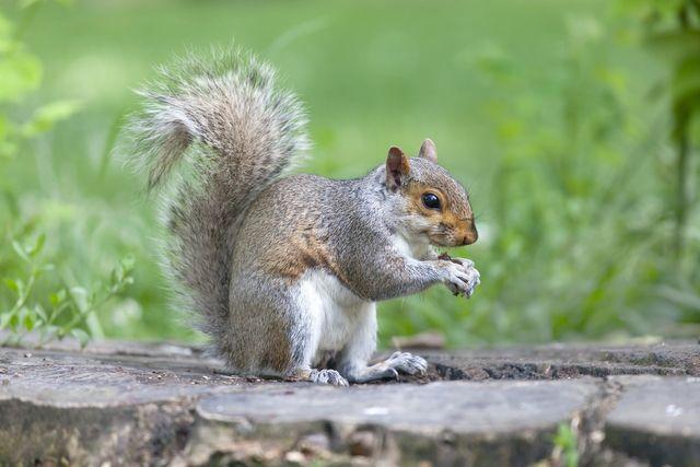 Seymour pest control, squirrels, moles, rabbits, pest control