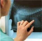 radiografia-digitale-veterinaria