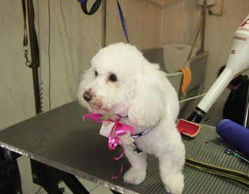Grooming - Stoke-on-Trent, Staffordshire - Barkers - Dog Grooming