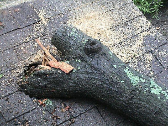 Tree Trimming San Antonio, TX
