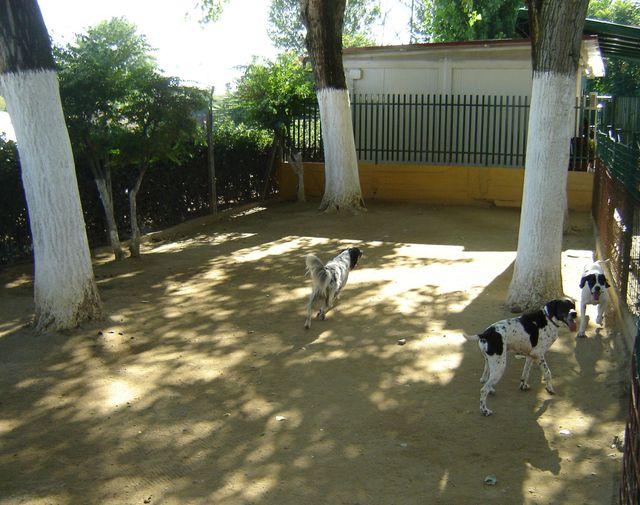 cani socializzano in un'area apposita recintata
