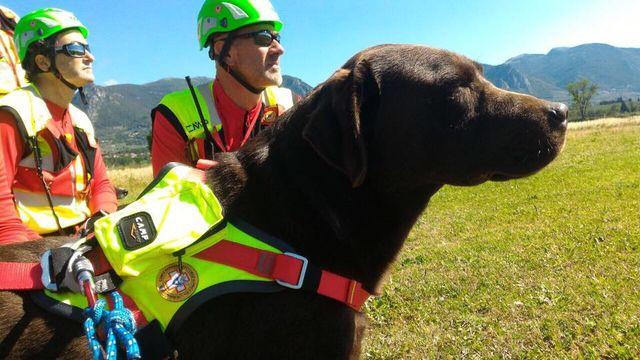 un cane con una pettorina e dei soccorritori