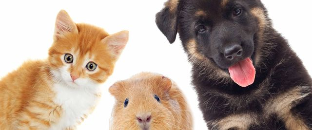 Trusted Vets in Adelaide | Morphettville Veterinary Clinic