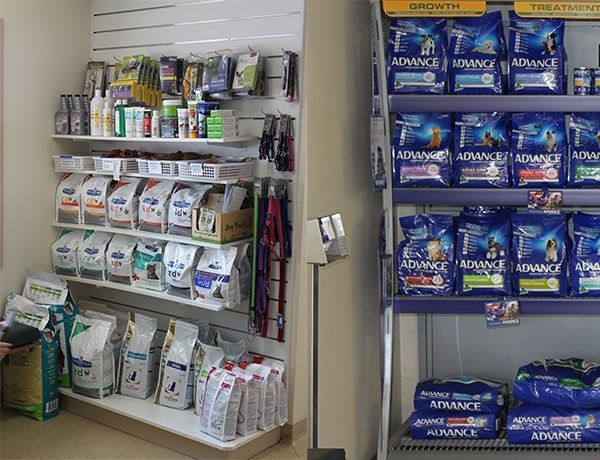 morphettville veterinary clinic our pet supplies at clinic