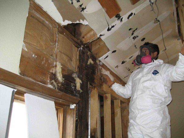 Inspection of moldy room
