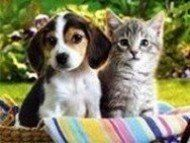 cat and dog sitter