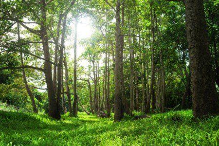 Un bosco verde, il sole splendendo tra le branche