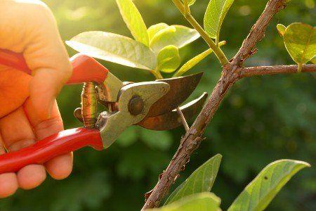 Una mano tagliando una rama dall'albero
