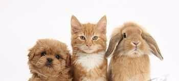 ew puppies, kittens and rabbits