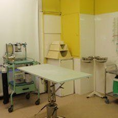 Specialised veterinary services