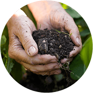 Foliar and radical composts