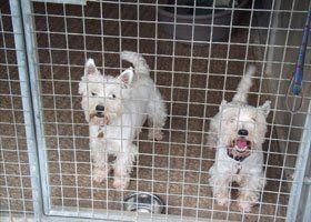 Dog boarding - Bristol, Bath - Chase Boarding Kennels - Dogs