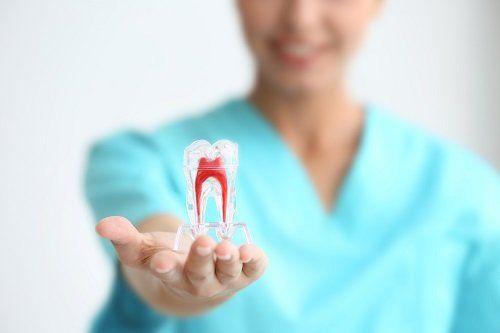 Modellino in 3D di un dente