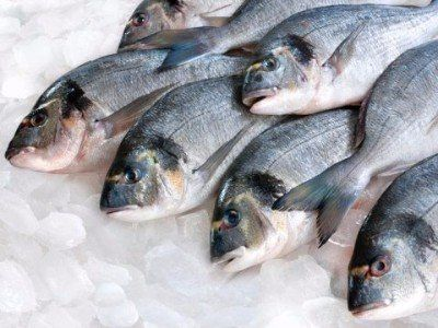 Pesce surgelato fresco - Arezzo