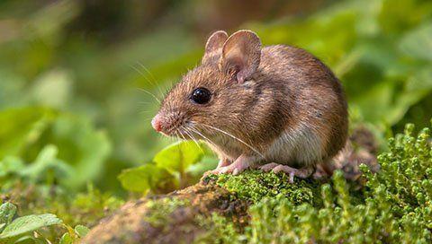 un  topo