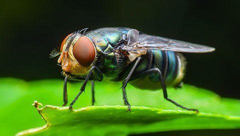 un ape color verde smeraldo