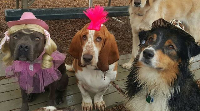theme day at doggy day camp