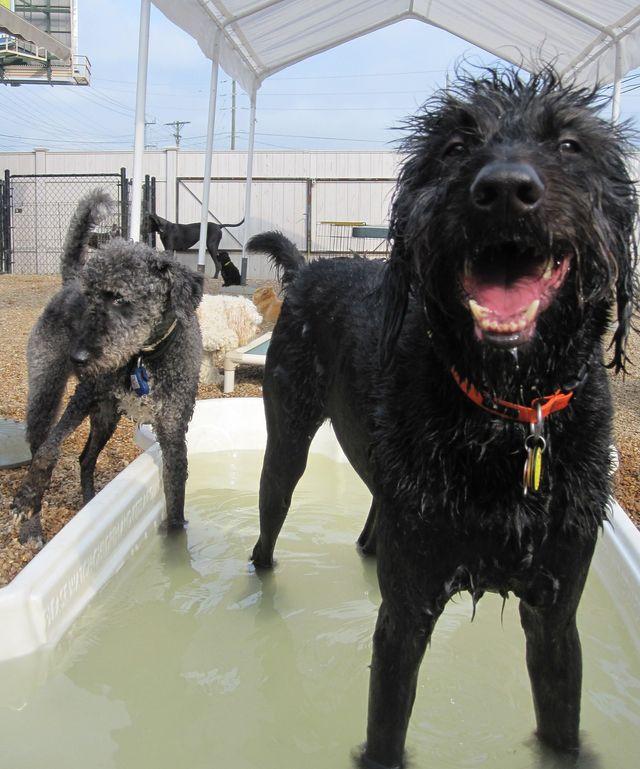 Dog Grooming in Chattanooga, TN,