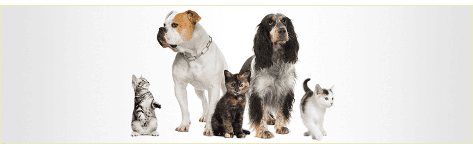 Pet Grooming Service For Cats And Dogs In Pudsey Leeds