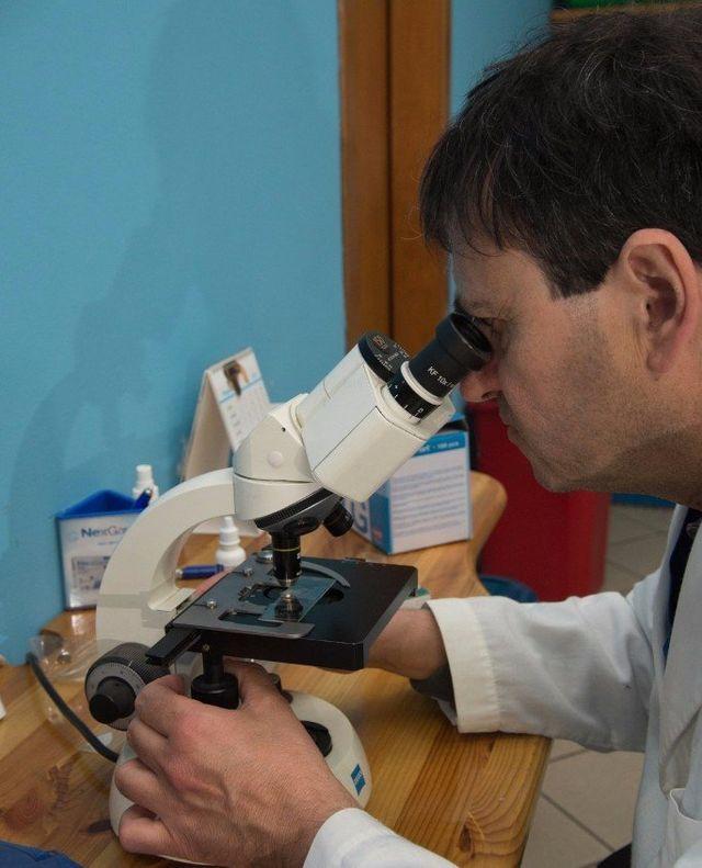 Veterinario che studia al microscopio