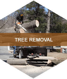 Tree Removal Buffalo, NY