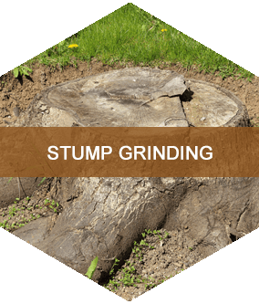 Stump Grinding Buffalo, NY