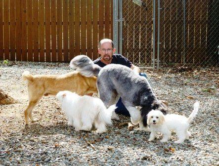 Dog Day Care Burlington, NC