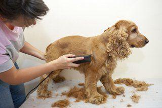 Pet Grooming Mebane, NC