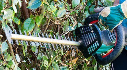 Hedge cutters