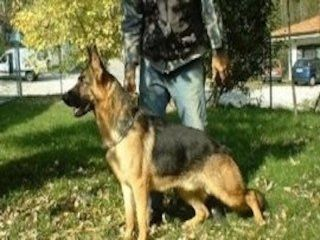 uomo durante l`addestramento a un cane