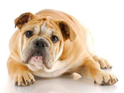 Scenic Hills Veterinary Hospital   Pensacola Dog Health Care
