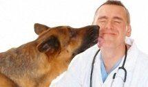 medico vetrinario per la cura di cani