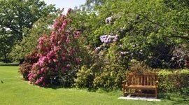 vista di un giardino con fiori