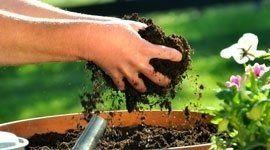 mani con concime per piante
