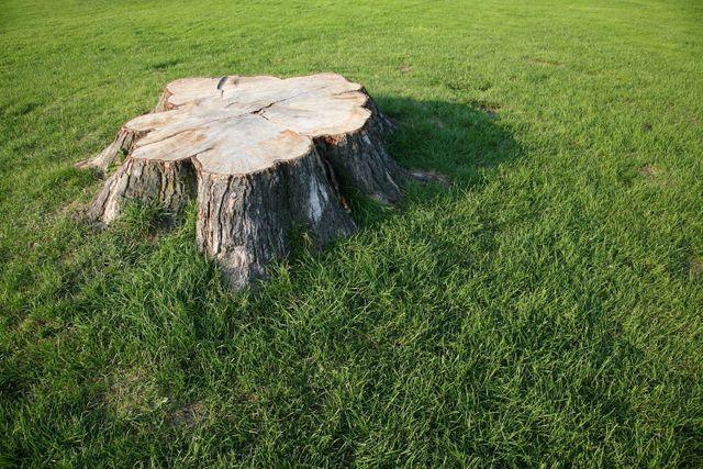 Tree stump in grass in Napier