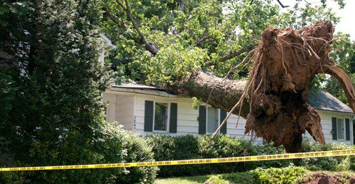 Tree removed for remodeling service in Goshen, OH