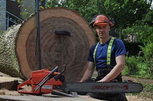 tree cutting - Cheltenham - Heath Tree Surgery - Big log