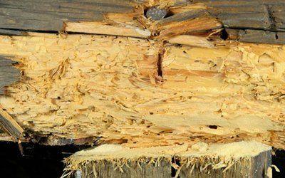 wood before treatment