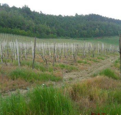 un terreno agricolo