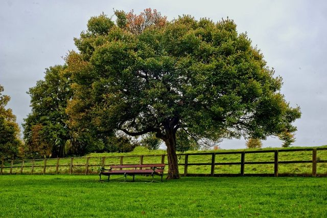 Reliable tree consultation