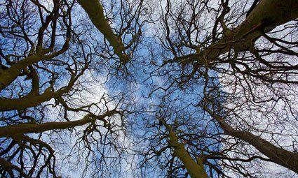 Tree pathology