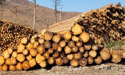 A pile of logs and woodchip for sales
