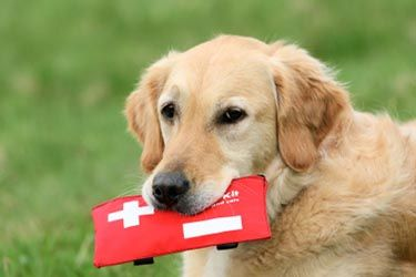 emergency pets services