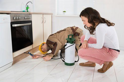 Realtor Inspection for Termites & other pests