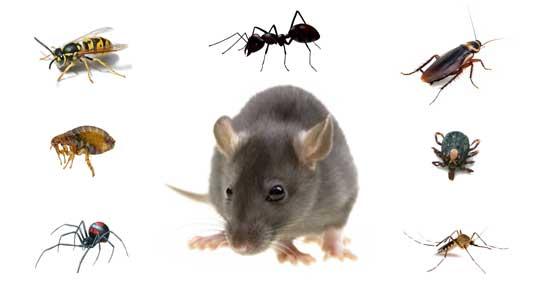 Pest Control Caldwell TX